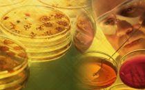 Разновидности грибковых инфекций, способных поражать кожный покров